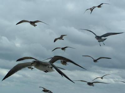 p375439-Virginia_Beach-Birds_flying_past_our_balcony