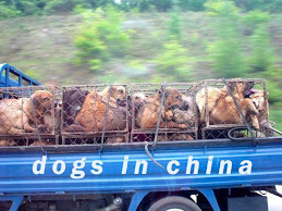 Daily, thousands of dogs, many former pets, are inhumanely caged, beaten, tortured and killed.