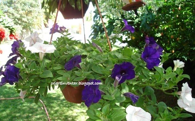 .~ Flores Do Meu Jardim Krafta