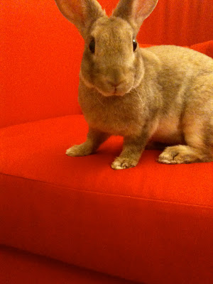 Bunny on red chair
