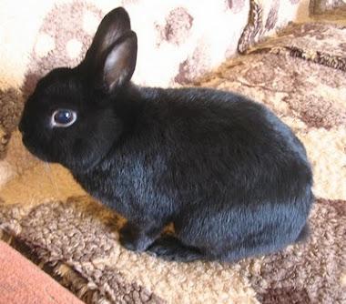 Chciałabym Wam pokazać mojego żywego króliczka Trunia ;-)