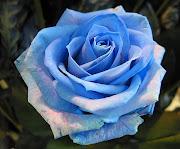 mediante flores