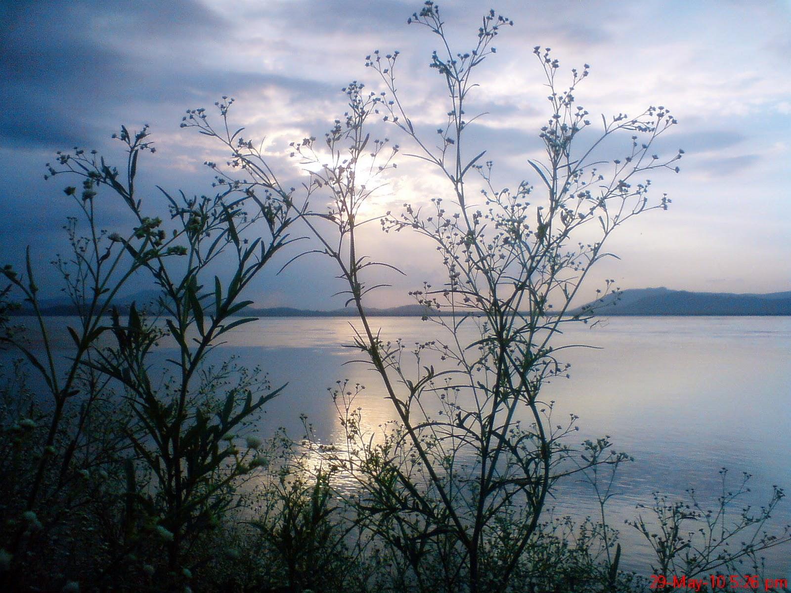 Love Nature Snap Beautiful Assam