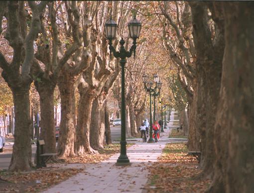 La Plata Calle 53