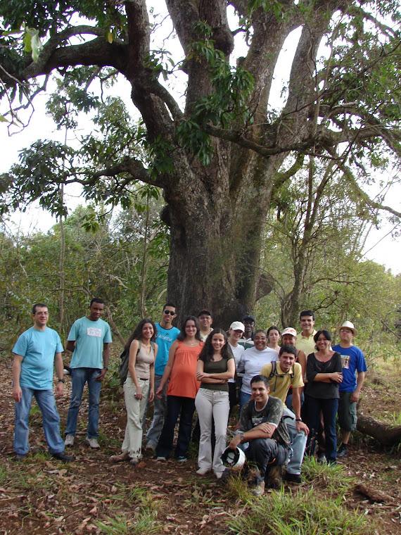 Alunos após a aula! A árvore utilizada foi uma mangueira muito grande e bacana!