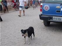 http://4.bp.blogspot.com/_3CpK4D54x4E/TQAWvnTzyKI/AAAAAAAACks/FRE1PnTmxb0/s1600/cachorro.jpg