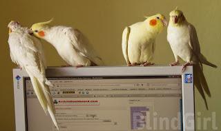 familie de papagali