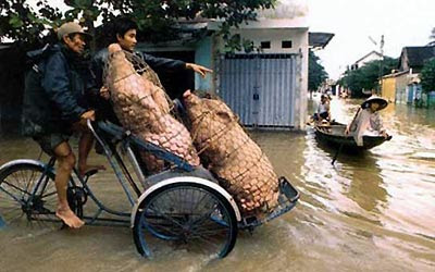 Vietnam, Transportation, Bicycle, Motorcyle, Tricycle, Hogs