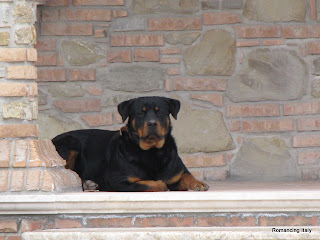 Dog at house near Le Castella