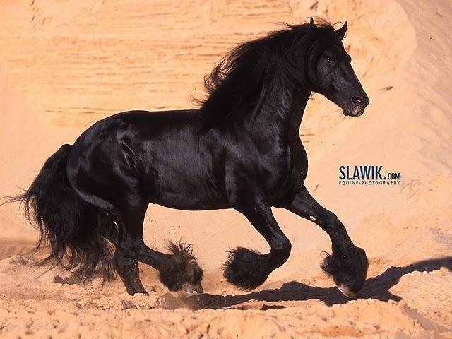 horses wallpaper horse backgrounds. horses wallpaper horse
