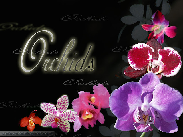 orchids wallpaper 1