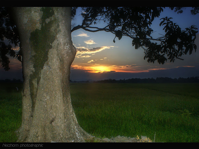 Big tree sunset photo