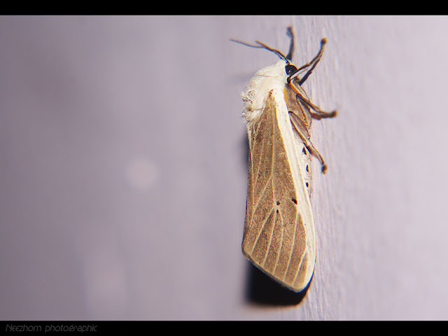 white and green moth picture