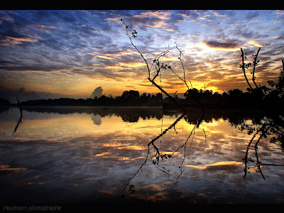 Silhouette of tree branches at dawn beside the river picture