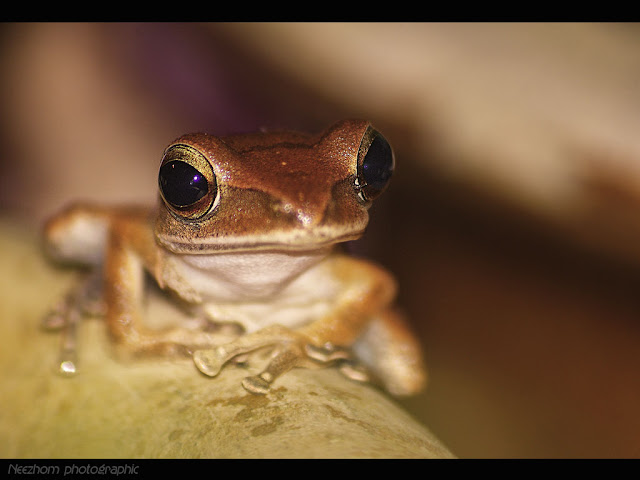 frog species animal picture