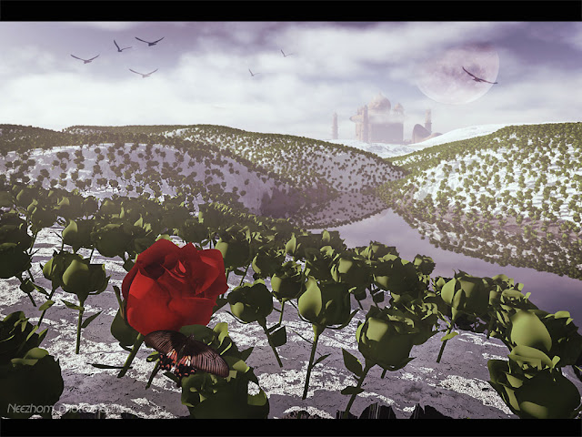 rose land 3d picture