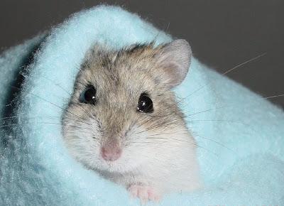Hamster photo