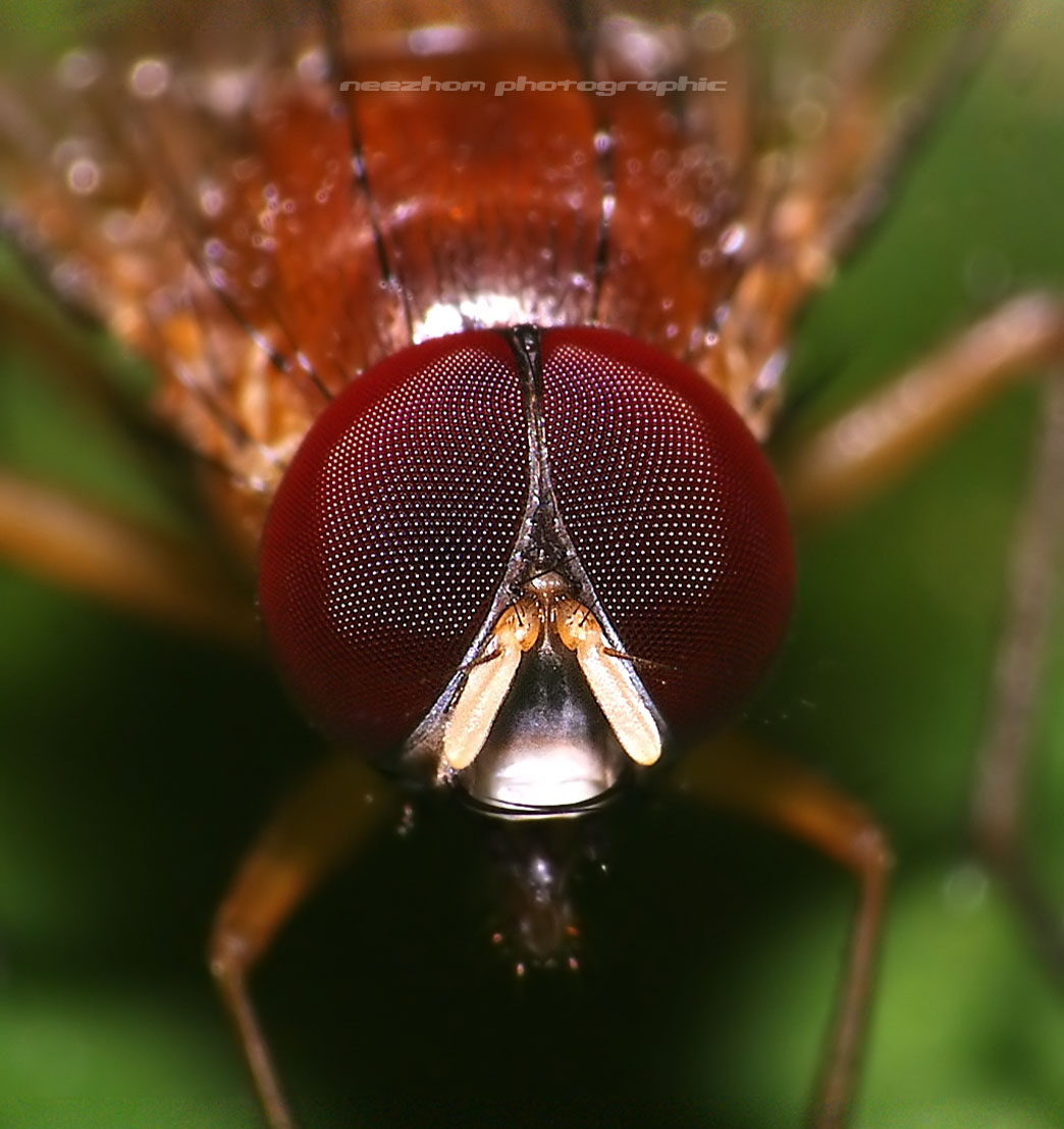 30 Great macro photography of insects face ~ Weird and ... Fly Eyes