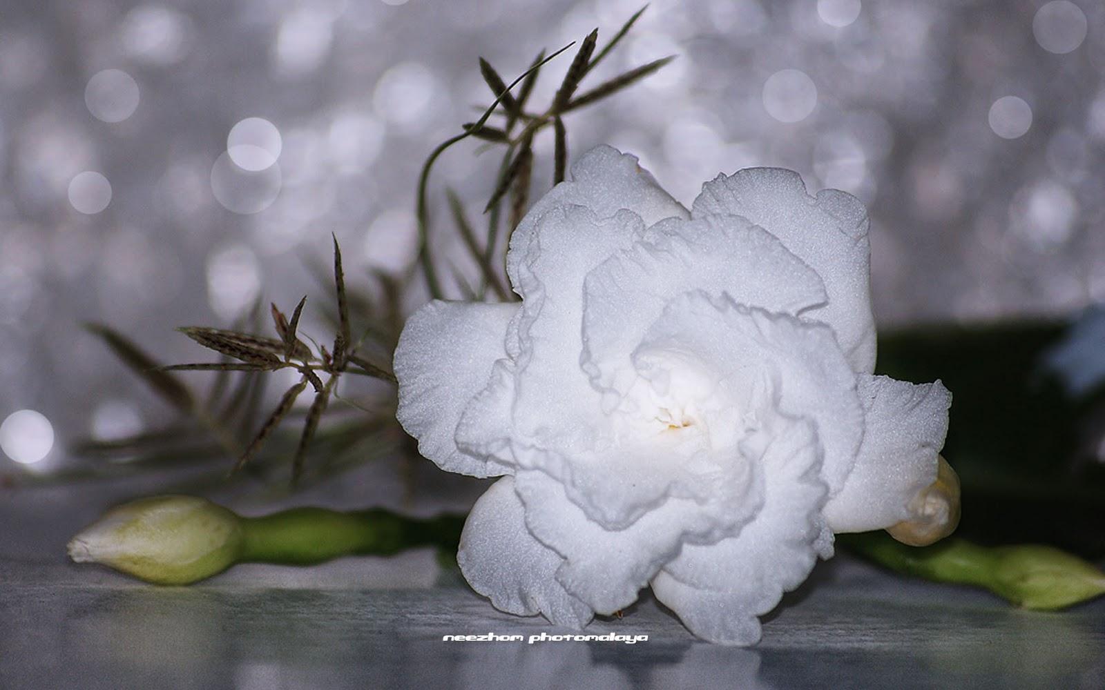 http://4.bp.blogspot.com/_3FTO6EjRbe4/TUke8nfz7VI/AAAAAAAAdEQ/QgNRRaqKV9k/s1600/Asam%2Bkelapa%2Bflower.jpg