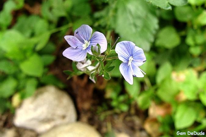 [13+floare+de+munte.JPG]
