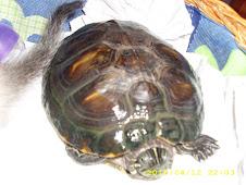 Nossa tartaruga Sortuda...