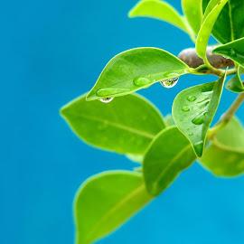 Gambar daun alami