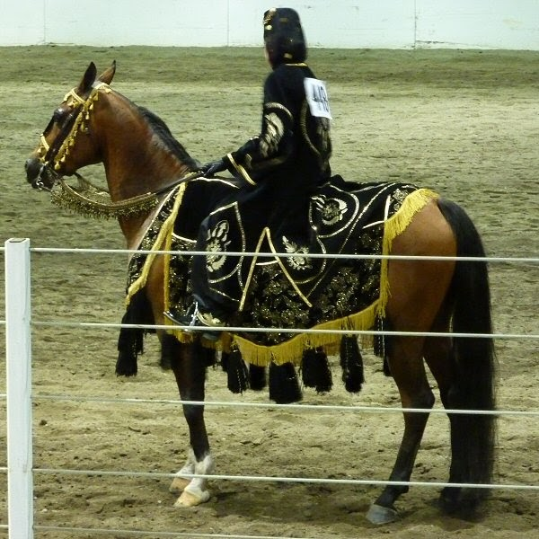 Blog and Pony Show: Region 5 Arabian Horse Show (costume ...