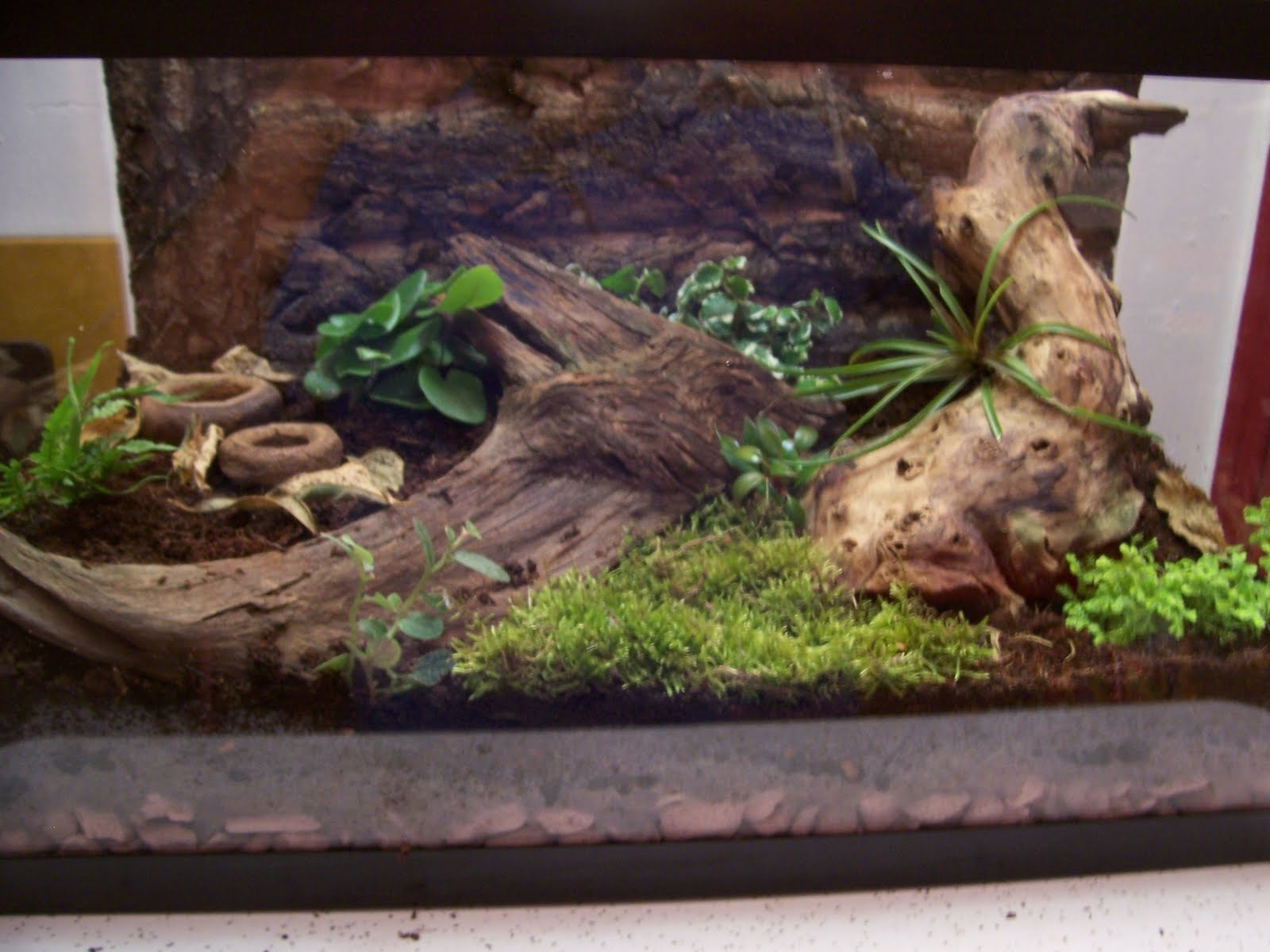 The Herper Reptile And Amphibian Care Vivarium Construction