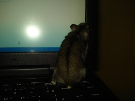 Meu Mouse