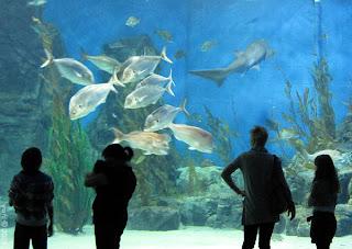 aquarium silhouettes