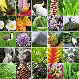 montage: sydney botanical gardens