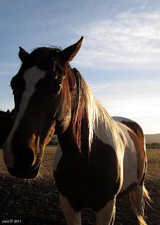 lefevre terrace horses