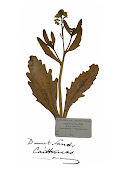 Robert Dicks pressed herbarium