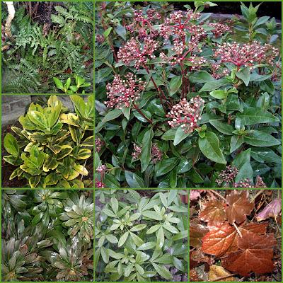 Design Plantes persistantes