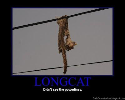 Longcat Demotivational Poster