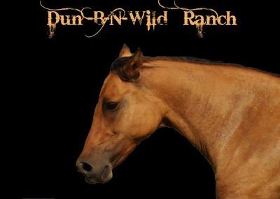 The Wild Dunz