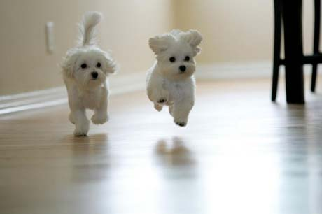puppies wallpapers. I have puppy envy.