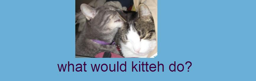 what would kitteh do?