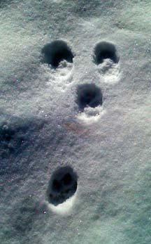 [footprints.web1]