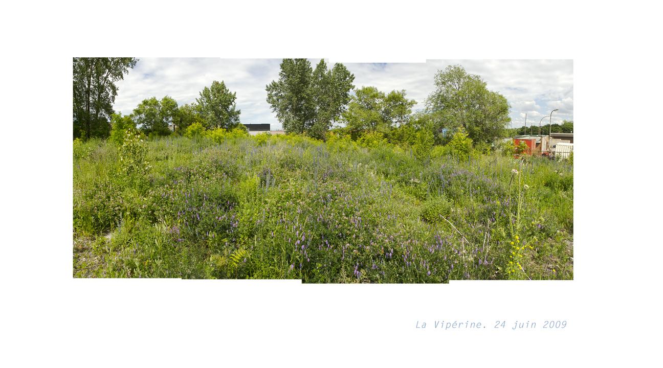 flora urbana ulysse et la vip rine