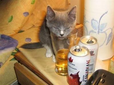Espero y les causen gracia y curiosidad, estos lindos gatitos borrachos. Fotos de animales, gatos borrachos