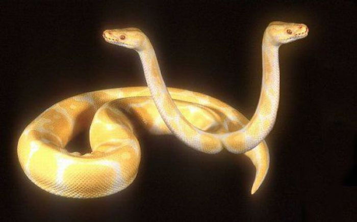 Serpientes Extrañas