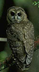 Spotted Owl habitat threatened by big timber company