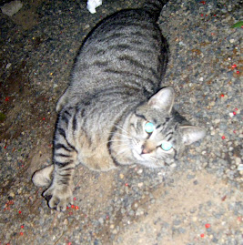 MUERTO¡¡¡¡¡  Envenenado por los vecinos ¡¡¡¡¡Adoptame gatito de 11 meses