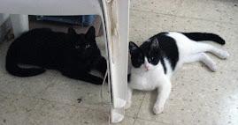 Adoptame gatitos de 6 meses