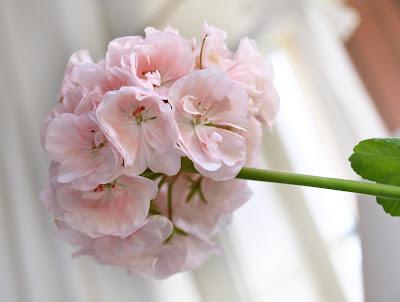 billiga blommor västerås