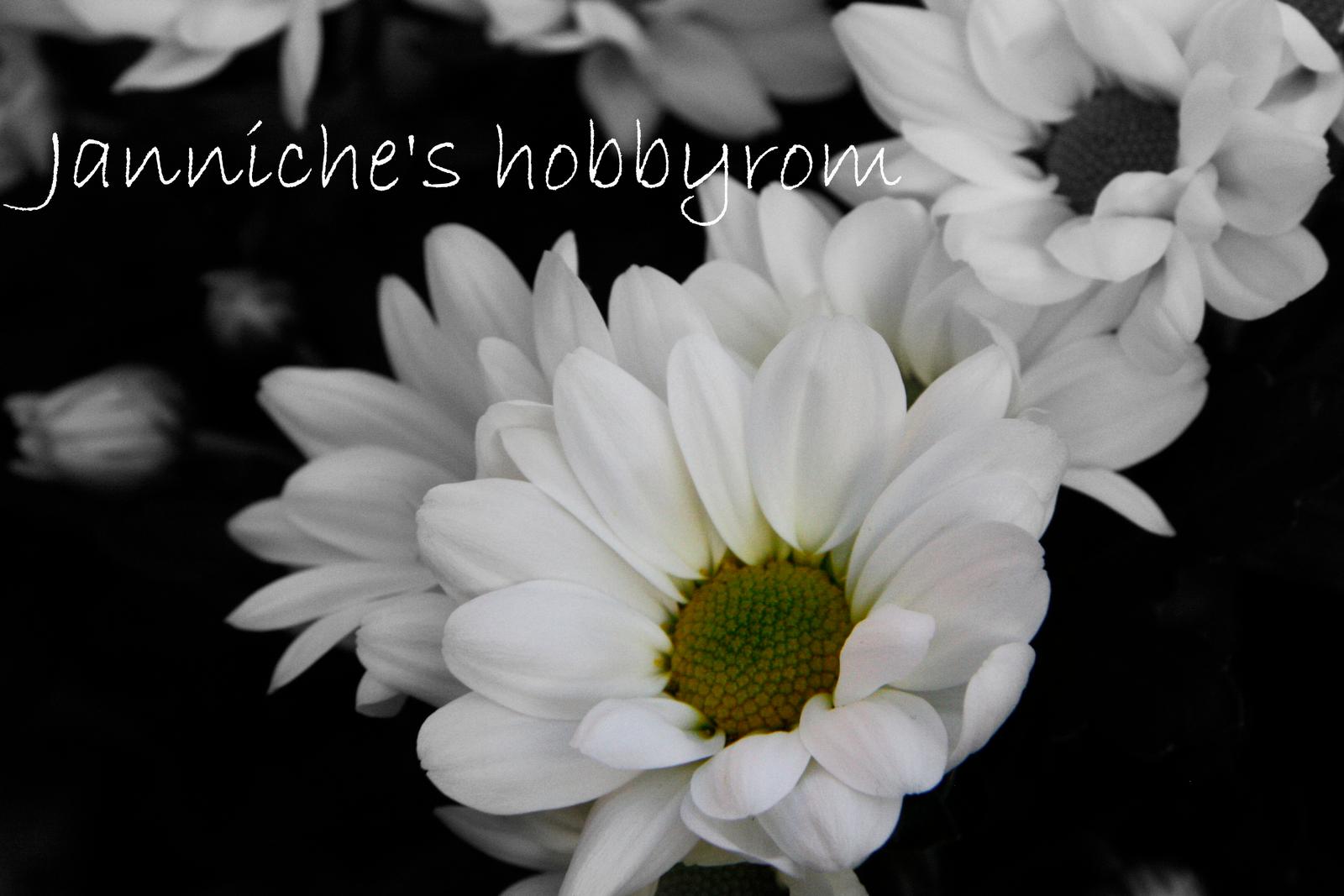 Janniche's hobbyrom