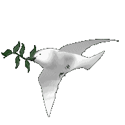 The Dove of Peace has flown from Ribbon in Australia to my place in New England.