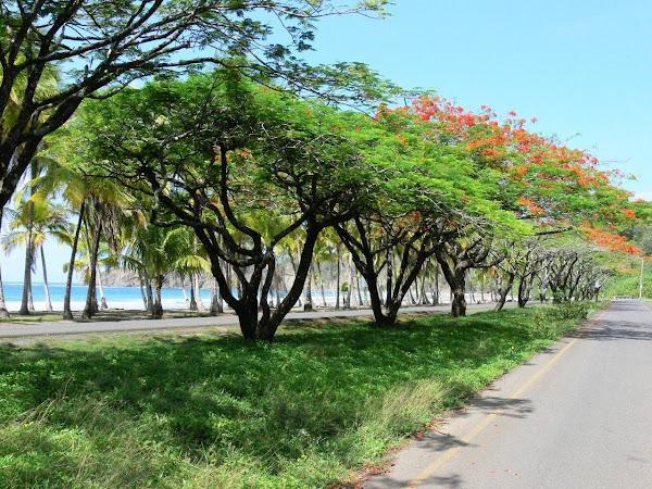 Cerca de la playa, Costa Rica