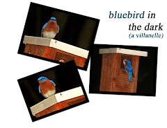 BLUEBIRD IN THE DARK